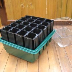 Sweet Potato Potting On Kit - 1 kit