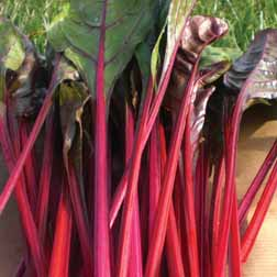 Leaf Beet 'Fantasy' - 1 packet (175 seeds)