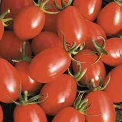 Tomato 'Rosada' F1 Hybrid - 1 packet (6 seeds)