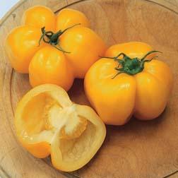 Tomato 'Yellow Stuffer' - Heritage - 1 packet