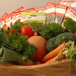 Healthy Vegetable Collection - 11 packets - 1 of each (2926 seeds in total)