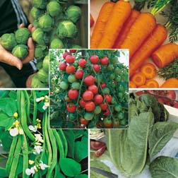 Vegetable Collection 'Customer Favourites' - 5 packets - 1 of each variety (1090 seeds in total)